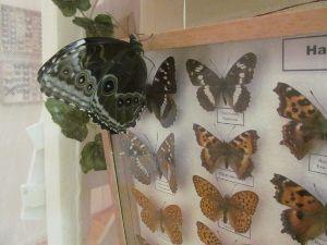 Бабочки в подарок тамбов 45